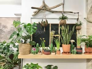 Boho, jardinerie et concept-store végétal à Nice