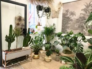 Boho, jardinerie et concept-store végétal à Nice (plantes grasses)