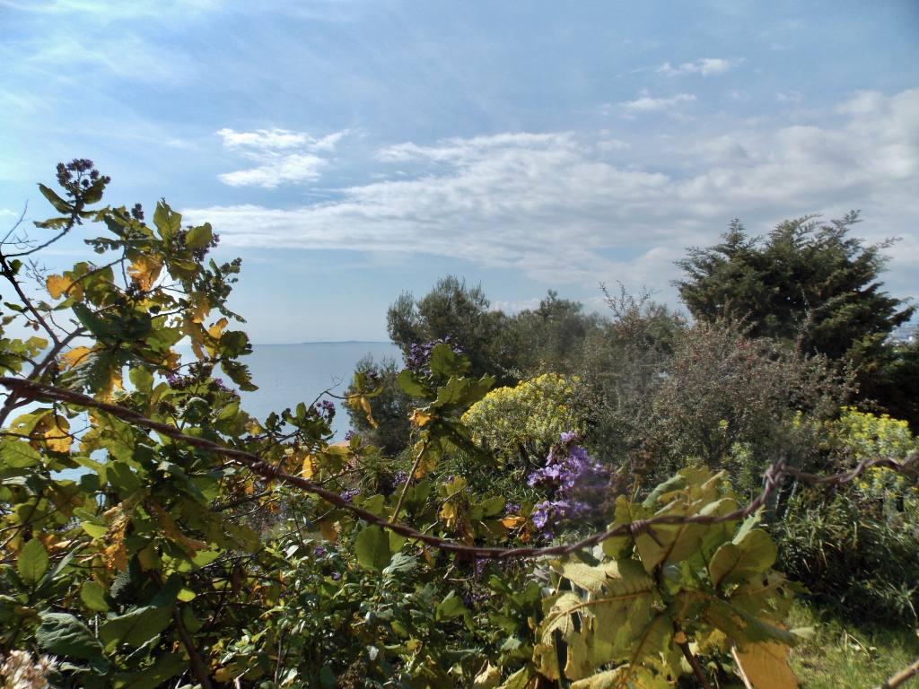 Mont Boron, colline à Nice (fleurs)
