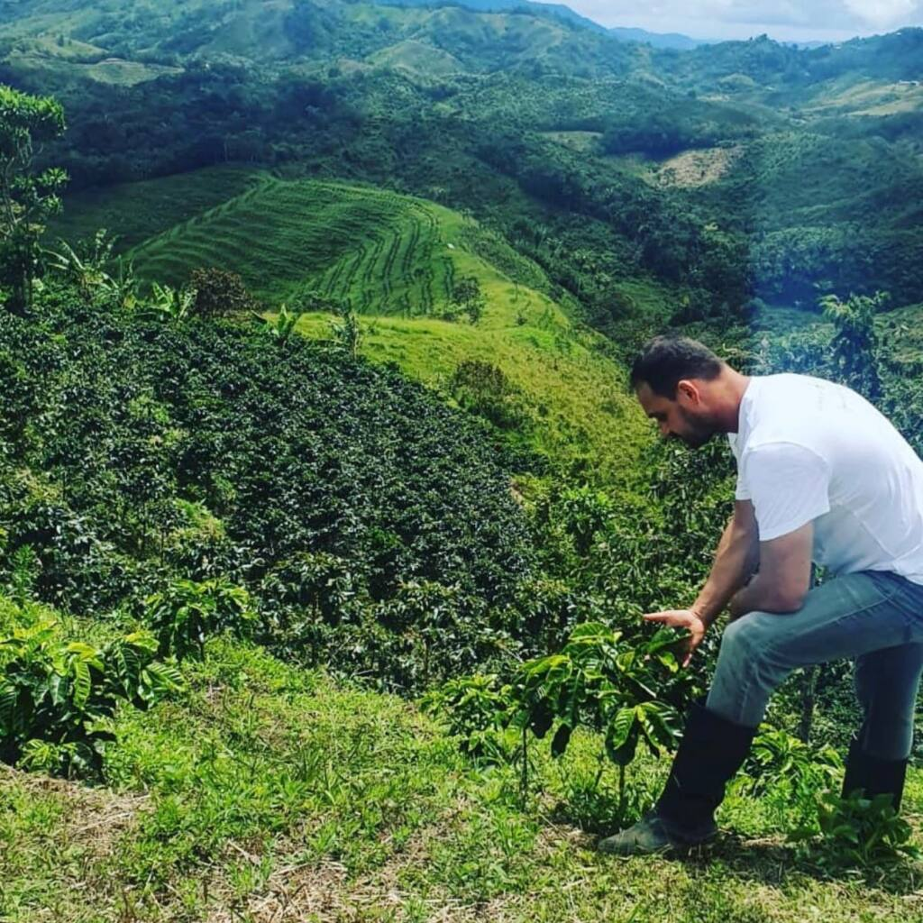 Green coffee, organic coffee, Nice city guide Love spots (coffee plantation)